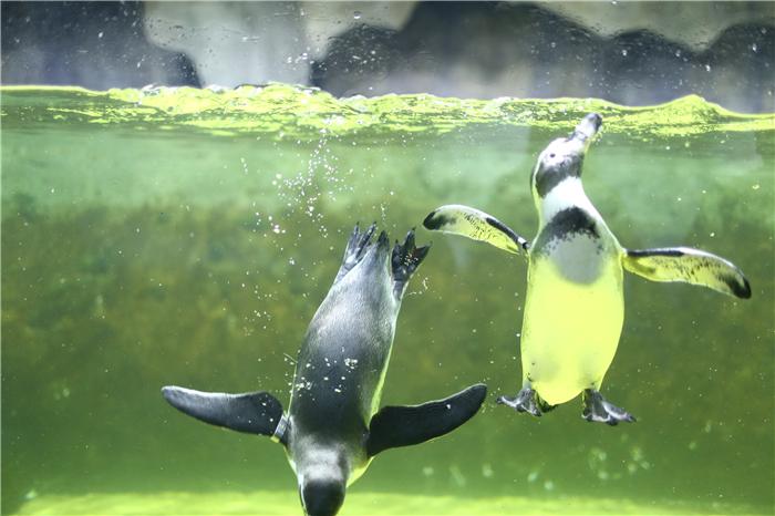 【10人起,天天发团】福州贵安海洋探秘世界+贵安花海拓展公园9项自驾1日游