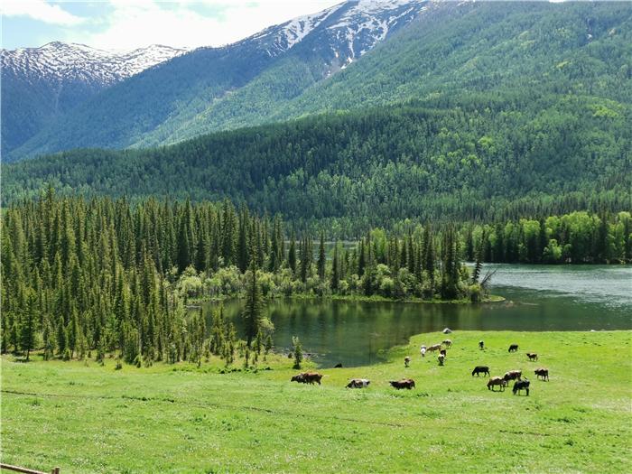 新疆喀纳斯湖景色怎么样