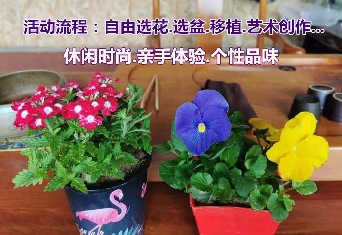 旗山万林生态园  鲜花移植