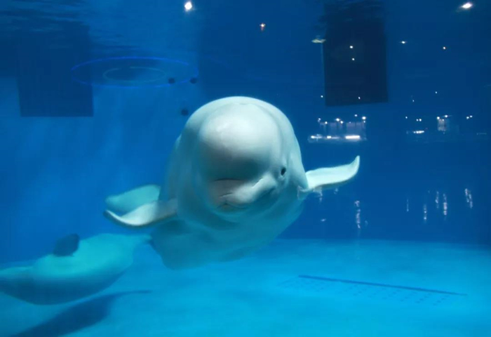 永泰欧乐堡海洋世界邀您畅想蓝色梦想