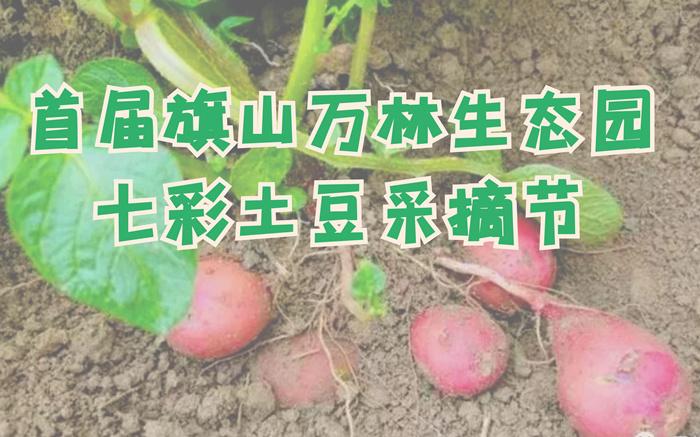 【首届七彩土豆节 | 散客自驾】旗山万林生态园挖七彩土豆散客自驾套餐---农耕体验,家庭亲子活动,需提前预订