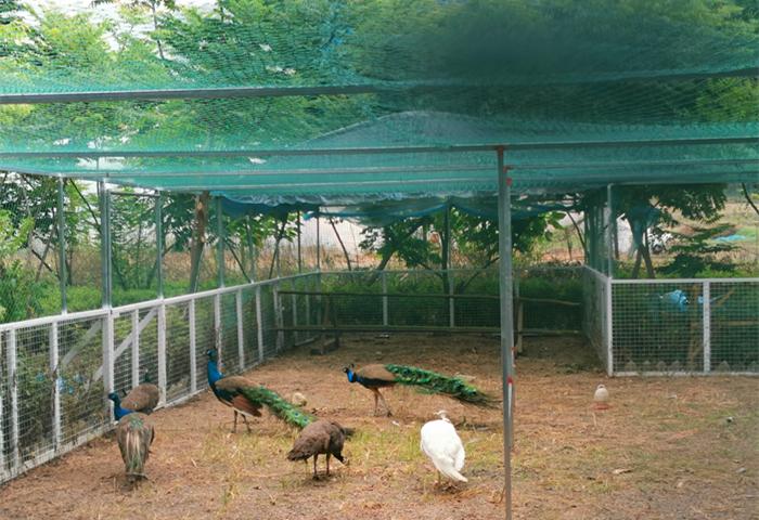 旗山万林生态园孔雀园
